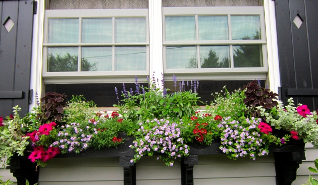 Window Boxes, Gardens and the Lazy Days of Summer